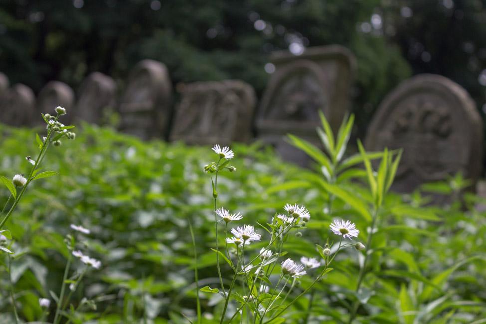 Warsaw-Jewish-Cemetery-01