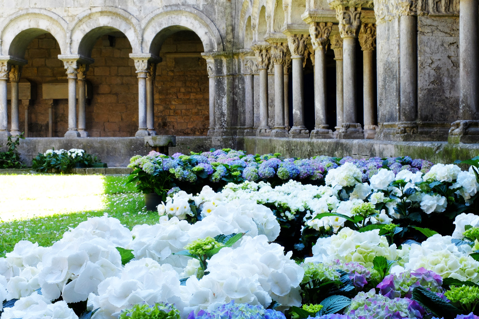 Girona-Spain-Flowers