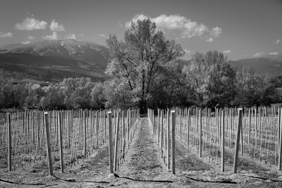 Pyrenees Vineyards