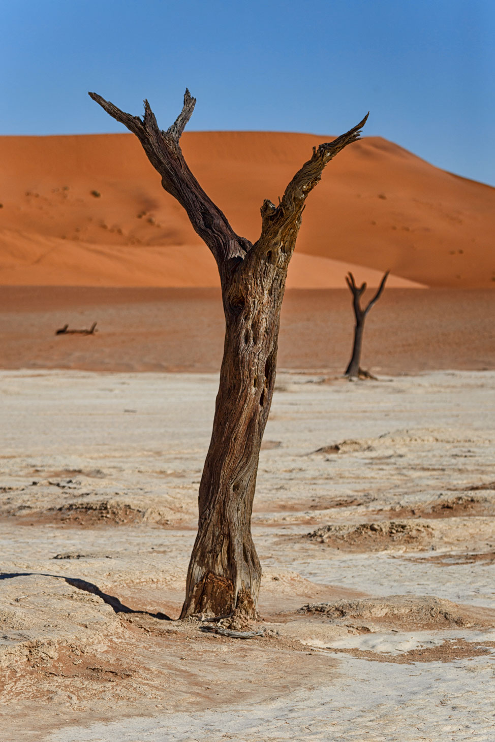 Deadvlei Models