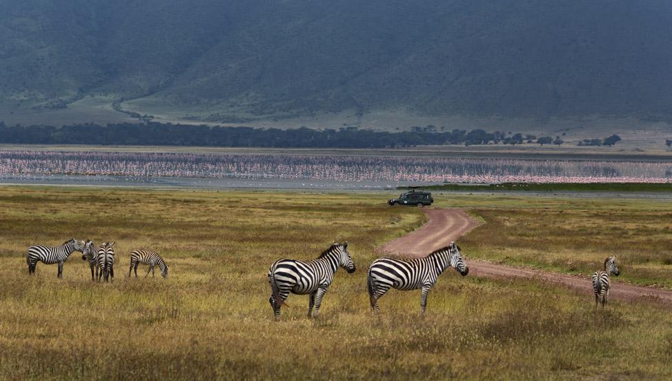 Zebras in Ngorogoro