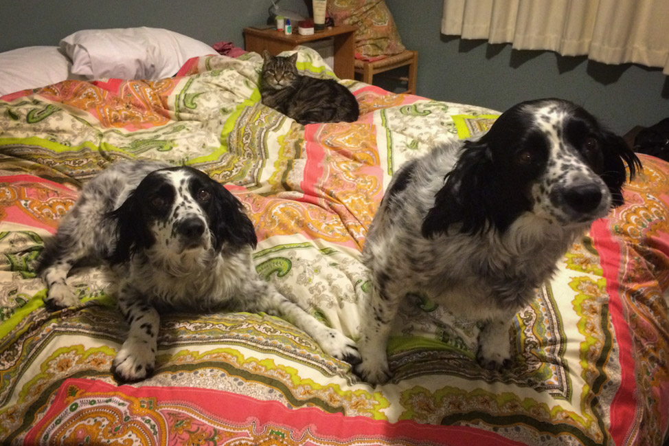 Is it Bedtime?