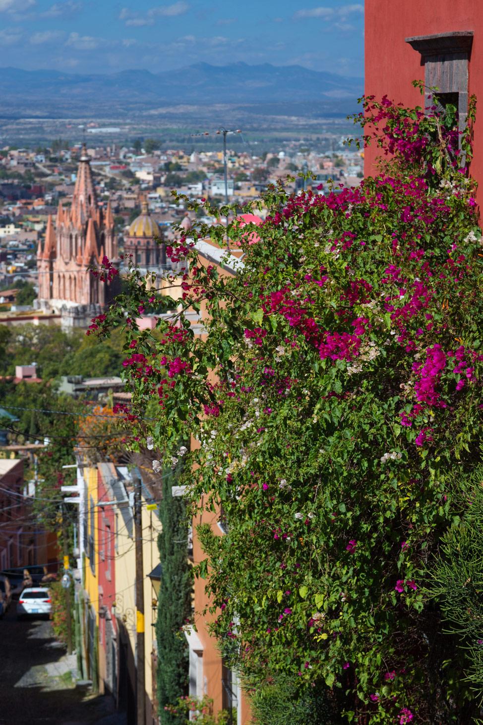 La Parroquia San Miguel de Allende - Flowers