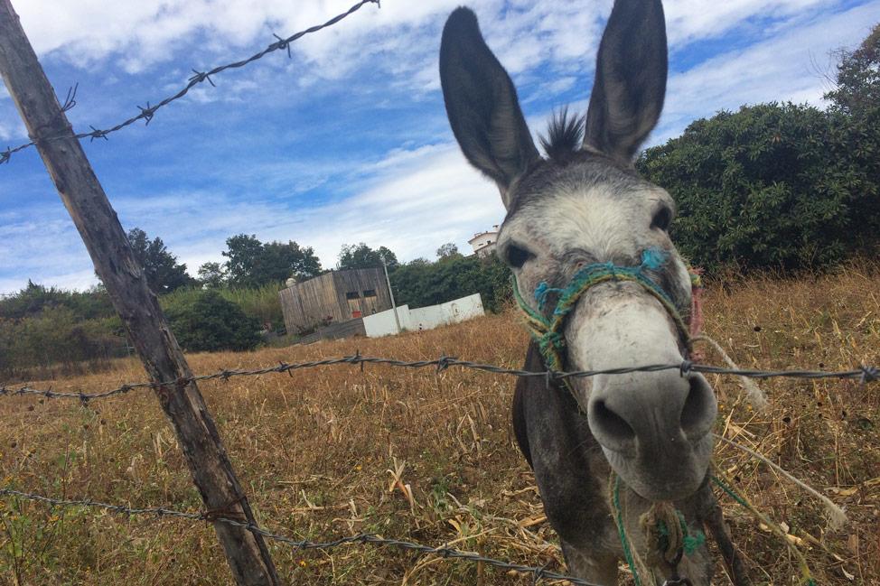 Harold the Donkey