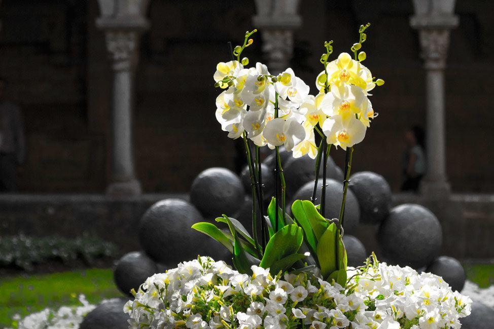Temps de Flors Lillies