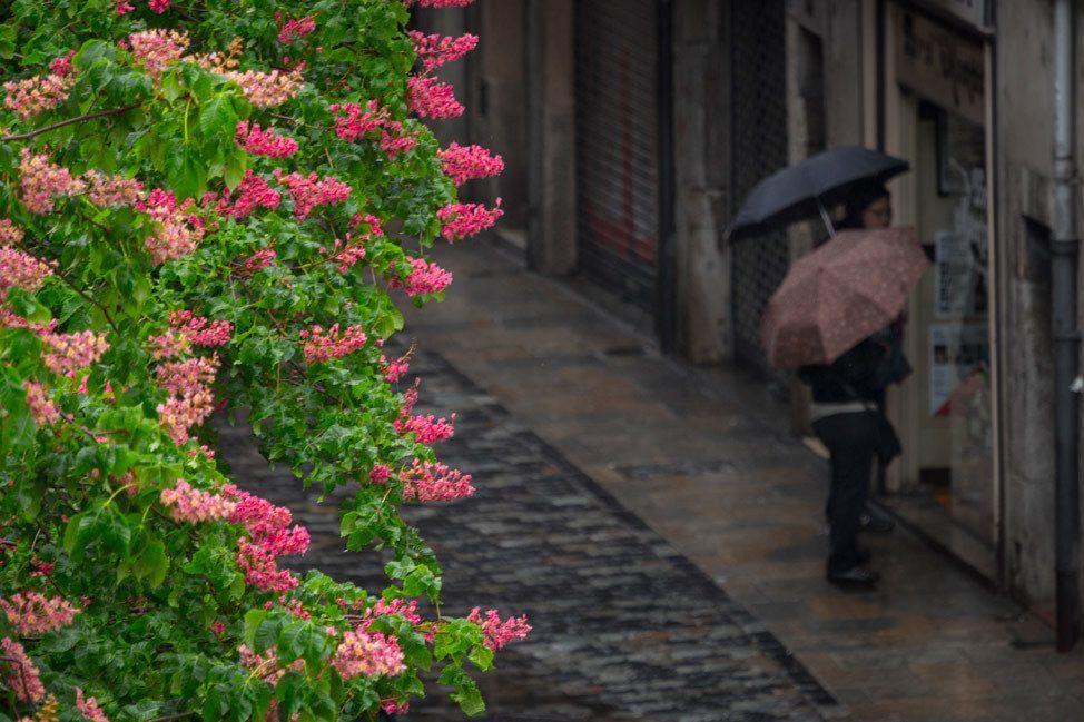 Temps de Flors Umbrellas