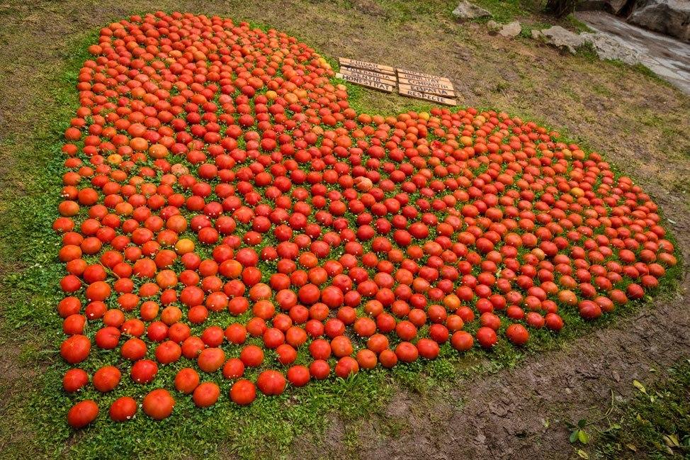 Temps de Flors Tomato Heart