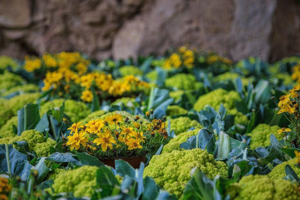 Temps de Flors Vegetables