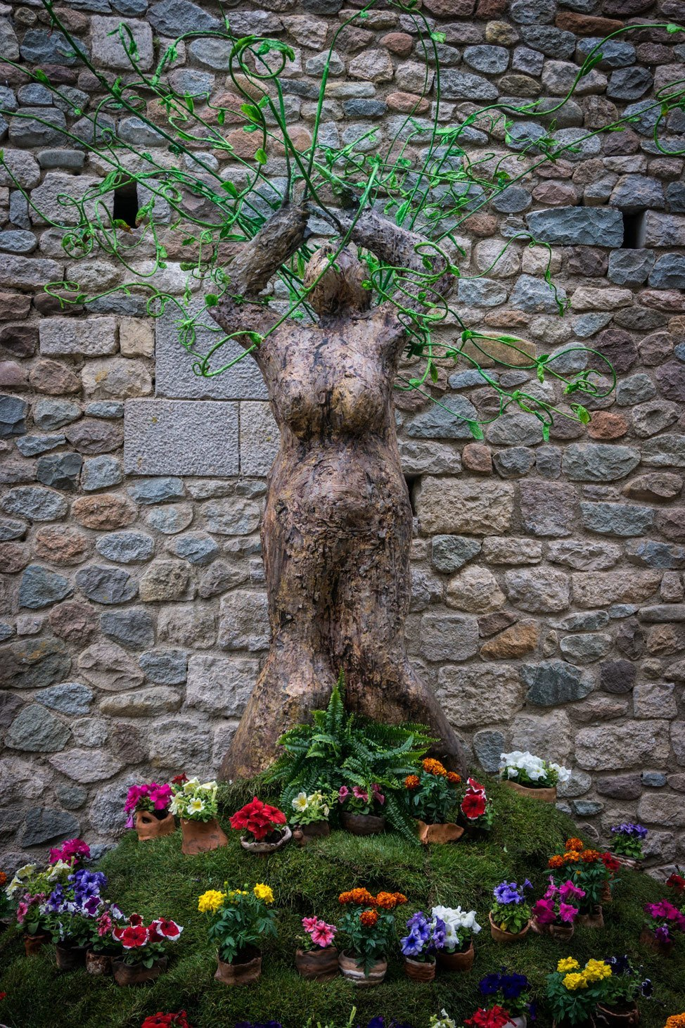 Temps de Flors Witchy Woman