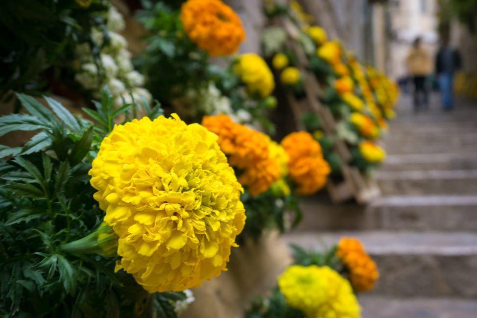 Temps de Flors Yellow and Orange