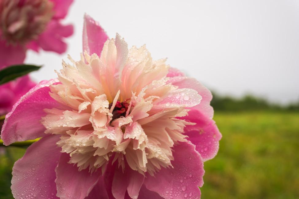 Grand Manan Flowers