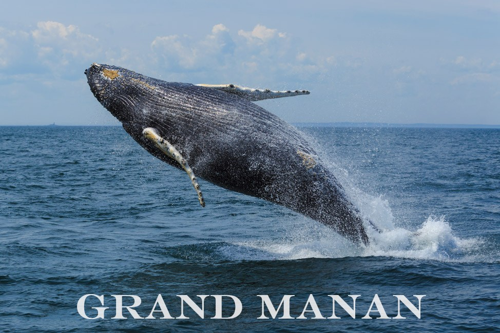 Grand Manan Whale Watching