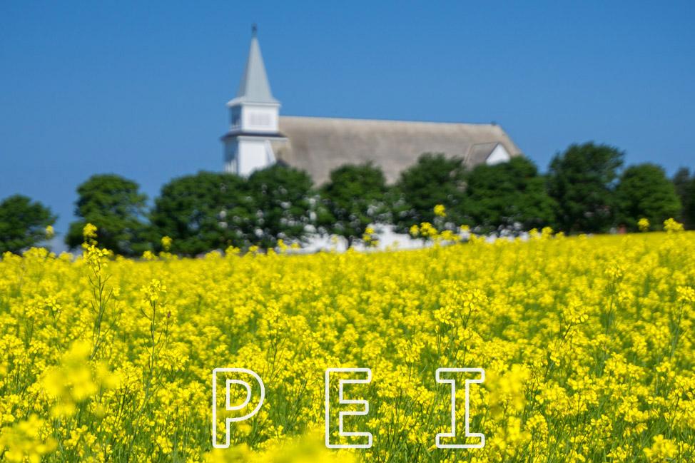 Fields-of-Yellow