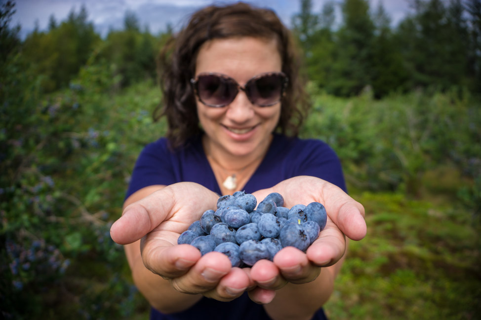 U-Pick Blueberries Digby