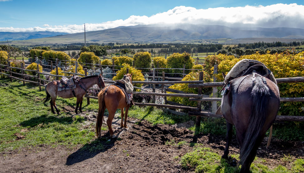 Back In the Saddle Again:  Horseback Riding in Ecuador thumbnail
