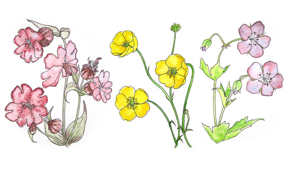 Genevieve Lacombe Sketch