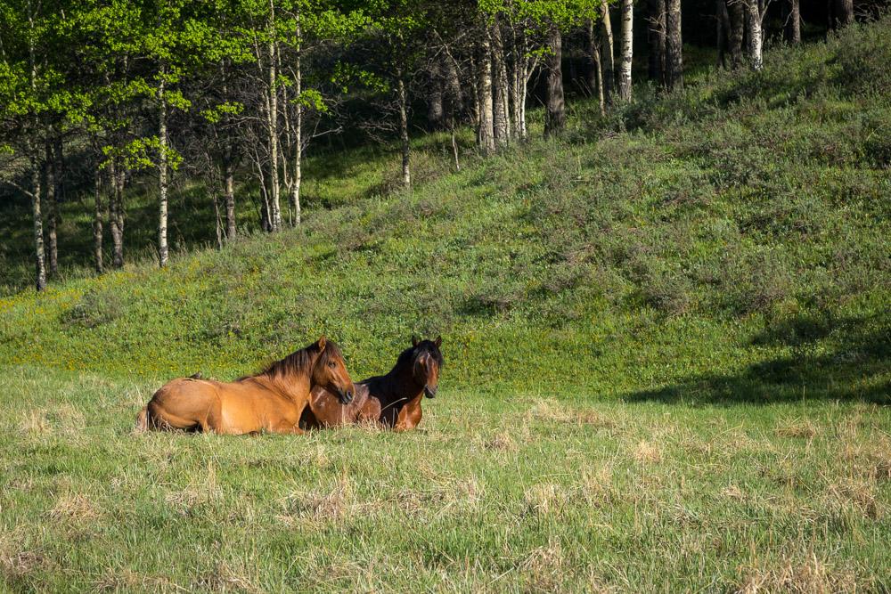 Wild Horses Buddies