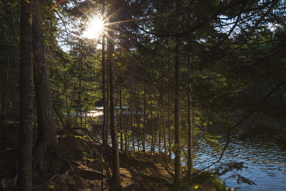 Sun-Through-Trees-Jewetts-Cove