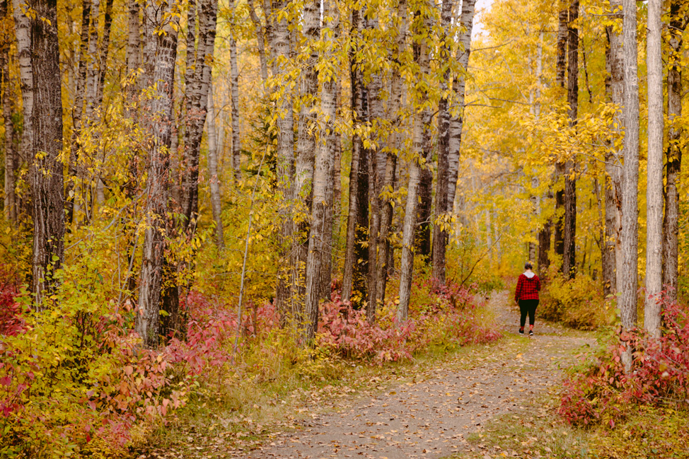 Dalene-Walking-Trees-Fall-Alberta
