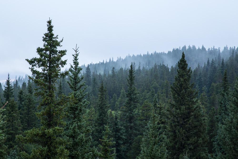 Cypress-Hills-Provincial-Park-Fog