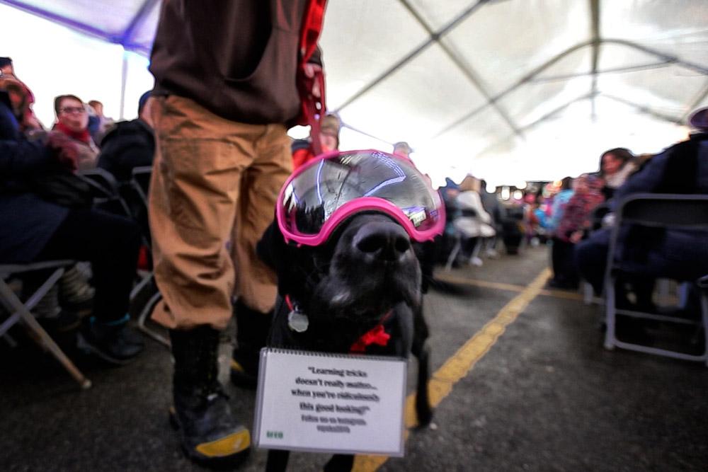 Dog-Parade-2