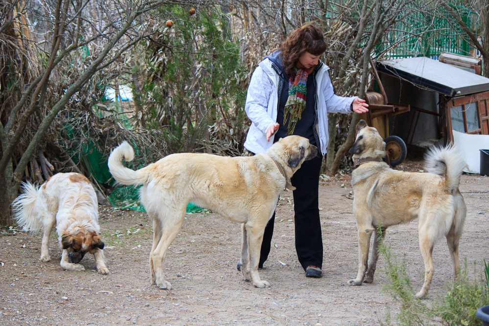 Dalene and the Turkish Dogs