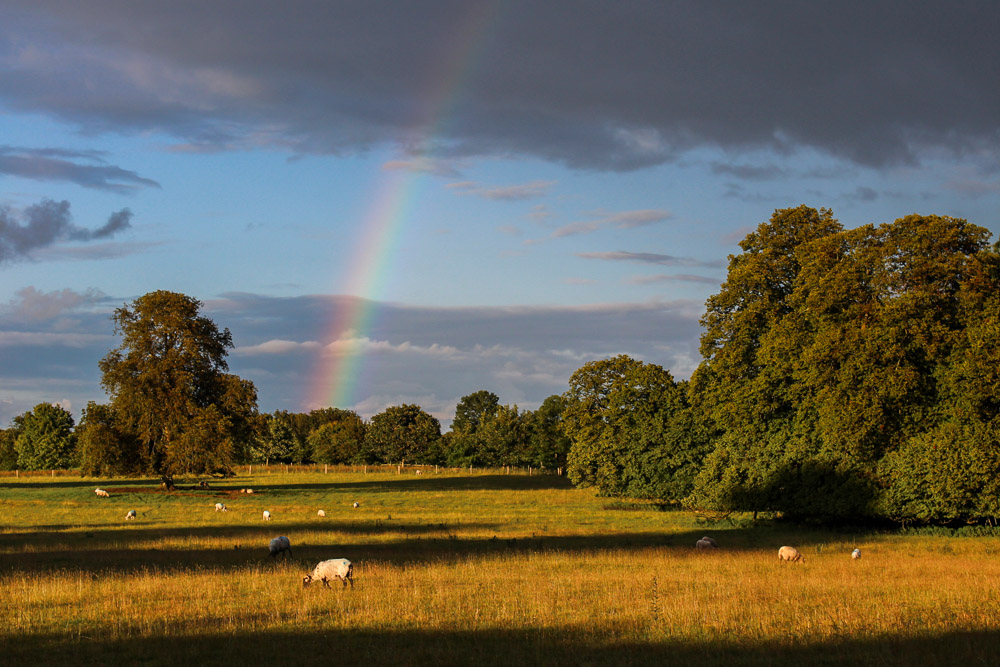 Ireland House Sit Farm