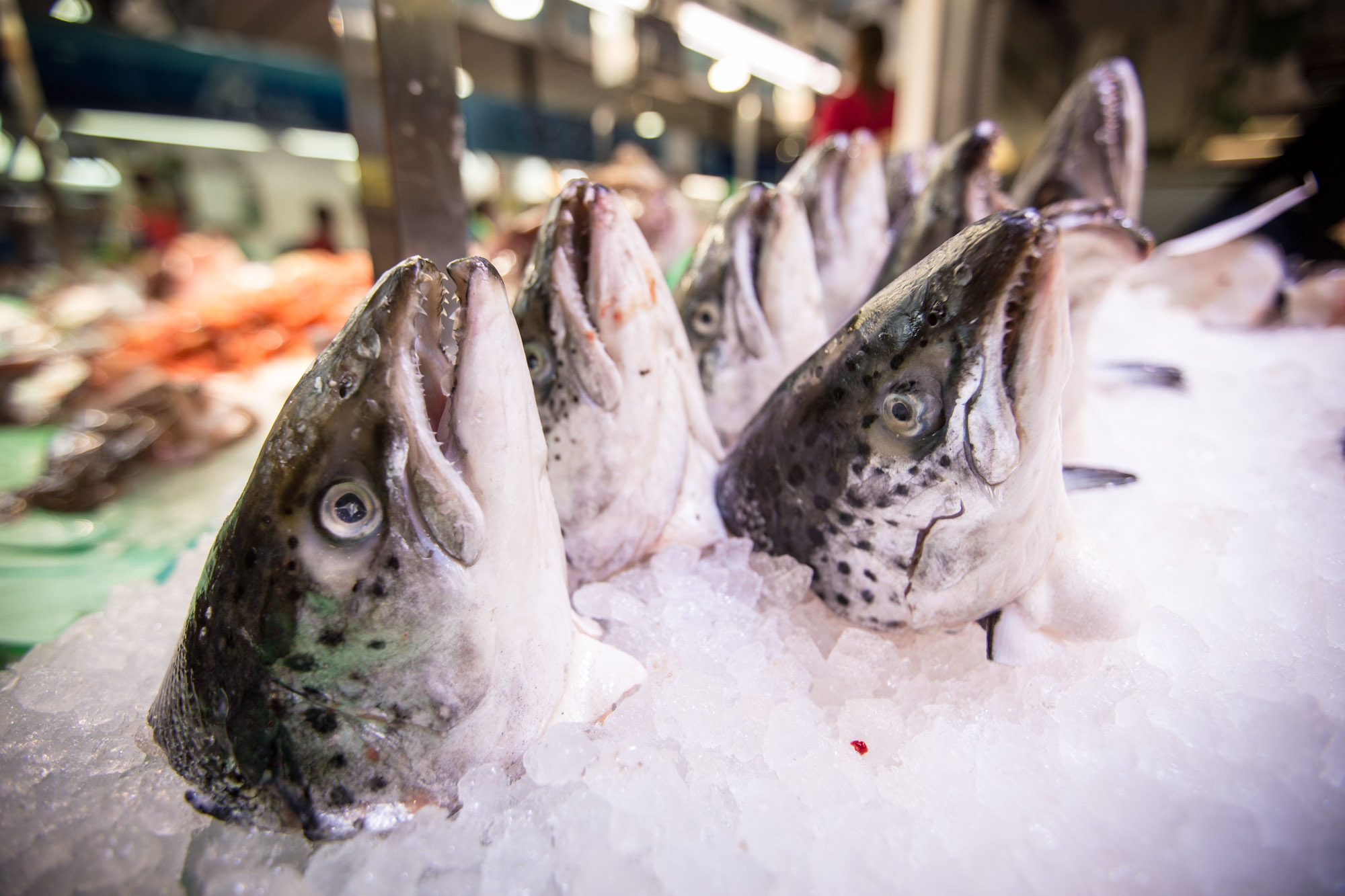 Fish from Mercat del Lleo