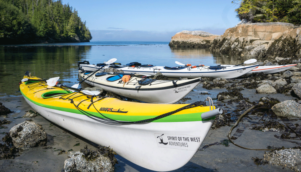 Kayaking with Orcas on the Whale Superhighway thumbnail